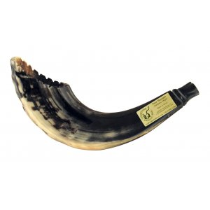 Ram's Horn Shofar Moroccan Style Dark Color with Crown Cut