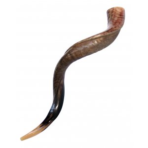Large Yemenite Kudu Shofar - Half Polished Half Natural