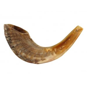 Medium Rams Horn Shofar - Natural