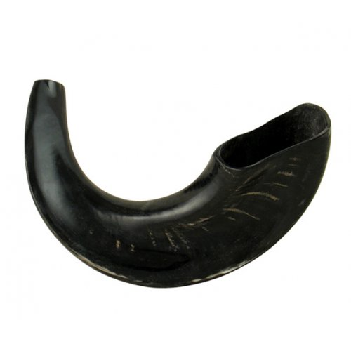 Medium Rams Horn Shofar with Dark Shades – Polished Finish